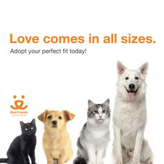 March reduced fee adoption special on all cats, six months or older, just $10. Also $10 adoption fee on these select dogs: Trail, Dottie, Charlie, and Ike & Annie (bonded pair).