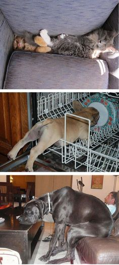 Cats And Dogs Losing The Battle Against Human Furniture @ilykenet