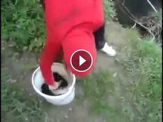 Veja o que essa garota faz com esses filhotes de cachorro - Vendo Videos da Web Click para assistir o video e escreva um comentário http://vendovideosdaweb.com/veja-o-que-essa-garota-faz-com-esses-filhotes-de-cachorro/