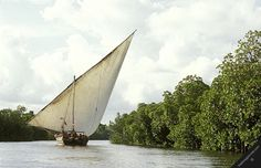 kenya indian ocean coast manda island channel lamu traditional wooden sailing dhow transport boat sail mangrove tree alley mangroves trees forests horizontal