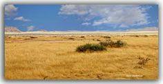 LA SABANA-SOSSUVLEI-NAMIBIA de antonio naranjo ojeda