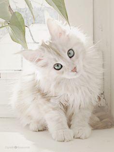 Cat by ROSASINMAS.deviantart.com on @deviantART