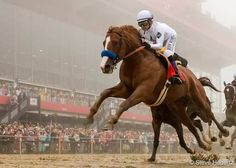 Justify winning the Kentucky Derby Stride like Secretariat All The Pretty Horses, Beautiful Horses, Derby Horse, Triple Crown Winners, Thoroughbred Horse, Horse Caballo, Dressage Horses, Appaloosa Horses, Sport Of Kings