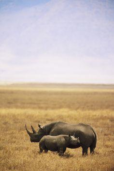 Mother Rhino and her baby -Ongorogoro Crater,Tanzania,Africa-scott stallard