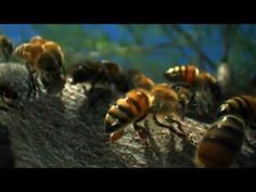 """The Beauty of Pollination"" - 4 minute video - perfect for Apologia Botany, chapter 4!"