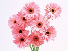 Daisies are my fave!!