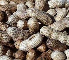 typospor.gr  : Κατάσχεση και καταστροφή φυστικιού με αφλατοξίνες ...