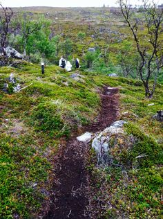 Skaidijärvi, Nuorgam Finland, Mountains, Nature, Travel, Naturaleza, Viajes, Destinations, Traveling, Trips
