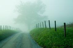 Fenced Foggy Lane