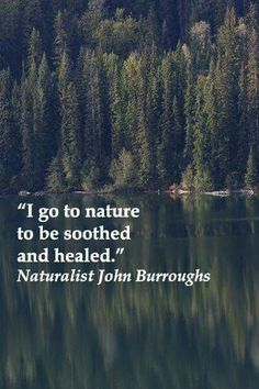 """I go to nature to be soothed and healed, and to have my senses put in order."" John Burroughs – On image of MOOSE LAKE in BRITISH COLUMBIA along Highway nicknamed The Fishing Highway Great Quotes, Quotes To Live By, Life Quotes, Inspirational Quotes, Camp Quotes, Hiking Quotes, Motivational, Meaningful Quotes About Life, Quotes About Roots"