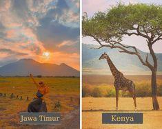 Taman Nasional Baluran di Jawa Timur =  Cagar Alam Maasai Mara di Kenya #judionline #bandarjudi #bolatangkas #8tangkas #jackpot Kenya, Giraffe, Movies, Movie Posters, Animals, Moonlight, Giraffes, Animales, Film Poster
