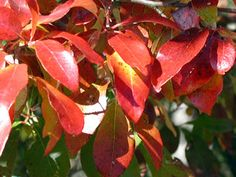 5 Uncommon Trees for Gorgeous Fall Color