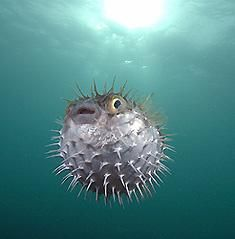 hubby calls me his little blow fish all the time when I get mad lol