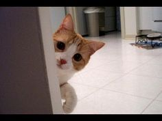 Ultimate Stalking Cat Video Compilation 2013 [NEW HD]