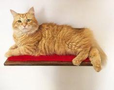 73e5c9cab1f9ac Wooden cat furniture - Made in Italy - di AthletiCat. Mobili Per GattoScaffali  ...