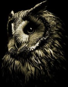 Love the black and white photography black and white animal photography Beautiful Owl, Animals Beautiful, Cute Animals, Owl Bird, Pet Birds, Wildlife Photography, Animal Photography, Buho Tattoo, Owl Pictures