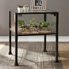 Showcase your air plant growing prowess in this Southern Enterprises Terrarium End Table . This end table doubles as a terrarium. It features a clear. Terrarium Table, Glass Terrarium, Buy Terrarium, Reptile Terrarium, Terrarium Plants, Black End Tables, Side Tables, Wholesale Furniture, Glass Panels