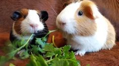 Grünzeugvernichter Rabbit, Animals, Bunny, Rabbits, Animales, Animaux, Bunnies, Animal, Animais