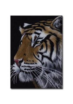 TIGER 45 portrait big cat feline pencil painting Sandrine Curtiss Art Limited Edition Print ACEO by Sandrinesgallery