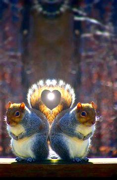 Zdjęcie Baby Animals, Animals And Pets, Funny Animals, Cute Animals, Beautiful Creatures, Animals Beautiful, Mops, Cute Squirrel, Squirrels