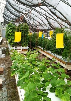 Aquaponics offer hope for year-round produce