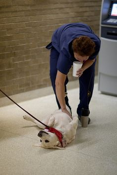 """A U-M Health System employee plays with Taffy from Therapaws during a """"Day in the Life"""" of the University of Michigan."""