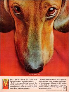 """1964 vintage Gaines Burger ad featuring a dachshund.  Also, same blog post, you will find """"Dixie the Tiny Dog"""" by Peter Himmelman - my favorite dachshund song!"""