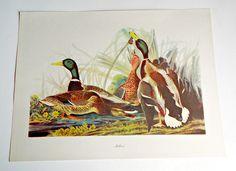 Audubon Bird Print For Framing Mallard Print 1940's Birds of America by treasurecoveally on Etsy