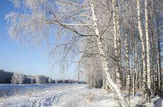 Зимний пейзаж на берегу канала имени Москвы.Россия.(фото №4)