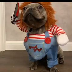 Chucky Dog Costume - Best Costumes for Small Dogs Funny Costumes for . - Chucky Dog Costume - Best Costumes for Small Dogs Funny Costumes for Small Dogs Animal Jokes, Funny Animal Memes, Dog Memes, Cute Funny Animals, Cute Baby Animals, Funny Dogs, Funny Puppies, Cute Animal Humor, Dog Humor