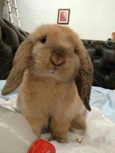 Lief klein konijntje ♡