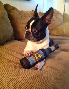 Funny Pictures Of Dogs - 20 Pics
