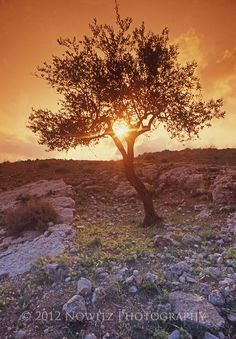 Images of shepherds fields in Bethlehem Israel - WOW.com - Image Results