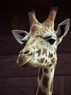 Taken at Taronga Zoo, Sydney.