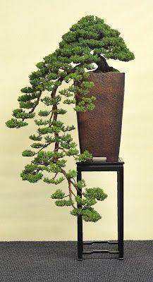 Bonsai - Living Art: International Bonsai and Kusamono Exhibition Hallein 2013