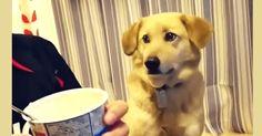 Хозяин-жадина не хочет делиться с собакой вкусняшкой