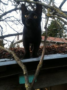 Cats Who Are Outside For The First Time And Trying Not To Lose Their Sh*t