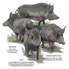 American Hunter | Game Profiles: The Wild Boar