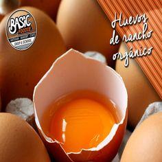 Basic-Foodie-8-300x300 Basic-Foodie-8-300x300