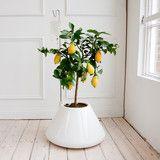 I.V. Plant Pot - White