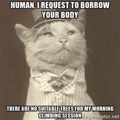 Aristocat meme - Human, I request to borrow your body there are no suitable trees for my morning climbing session