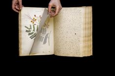 An Important Book of Botanical Drawings Is Rediscovered in New York After Nearly 200 Years New York Library, Scientific Drawing, Unusual Plants, Impressionist Paintings, Botanical Drawings, Paintings I Love, Botany, New Art, Art News