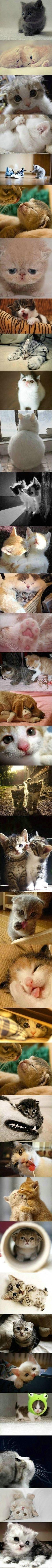 Kittens Galore!