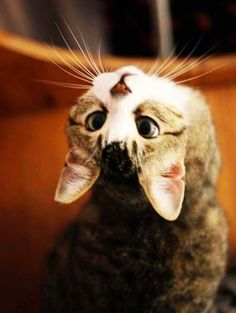 Cute You Look Great Upside Down. More cute images of cats and kittens, visit http://pewpaw.com/?p=25499, #cat, #kitty, #animals, #funny. #cat, #animals,… - Pew Paw - Google+