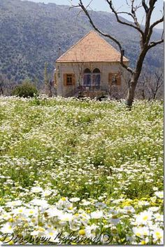 Discover Lebanon Image Gallery / Old houses / Baskinta home flowers Byblos Lebanon, Beirut Lebanon, Wonderful Places, Beautiful Places, Traditional House, Traditional Styles, Home Flowers, Old Buildings, Architecture Plan
