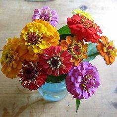 Zinnia Lilliput Mix Flower Seeds (Zinnia Elegans) 50+Seeds - Under The Sun Seeds  - 1