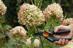 Hortensien für Blumensträuße trocknen – in nur 30 Minuten