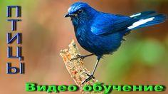 Птицы, Развивающий мультик, Фото птиц, Названия птиц, Пение птиц, Обучаю...