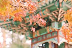 Fall foliage forecast Korea 2018 — Top 16 best places to see autumn fall foliage Korea 2018 - Living + Nomads – Travel tips, Guides, News & Information! When Is Autumn, Autumn Fall, Autumn Photography, Travel Photography, Autumn In Korea, Autum Leaves, Red Maple Tree, Yellow Tree, Best Seasons
