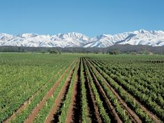 Mendoza Vineyards in the Andes (Argentina) I've been here too! It was the first time the people on the tour bus had ever seen snow. Wish I could see this is in the summer! Places To Travel, Places To See, Patagonia, Wine Vineyards, Argentina Travel, Thinking Day, In Vino Veritas, Wine Country, Wonders Of The World